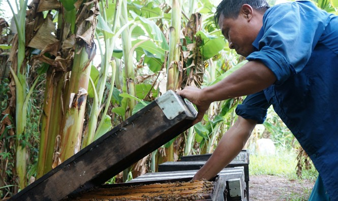 Di dời đàn ong Ý khỏi rừng tràm U Minh Hạ - ảnh 1