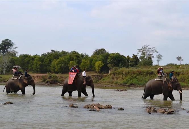 Kỳ bí chuyện săn voi giữa đại ngàn - ảnh 2