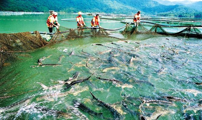 Tuyệt phẩm từ cá tầm - loài cá hoàng gia - ảnh 2