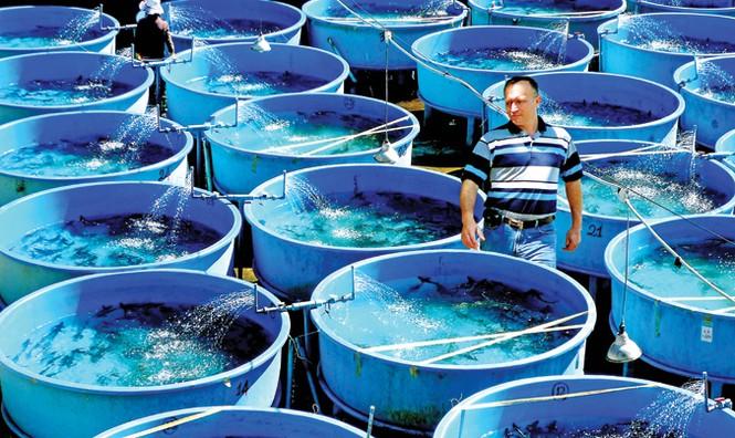 Tuyệt phẩm từ cá tầm - loài cá hoàng gia - ảnh 4