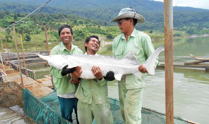 Tuyệt phẩm từ cá tầm - loài cá hoàng gia - ảnh 1