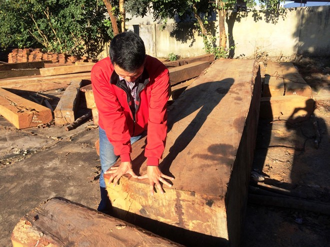 Triệt hạ gỗ quý hiếm như chốn không người - ảnh 1