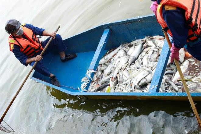 Cá chép 5-6 kg chết nổi trắng hồ Tây - ảnh 4