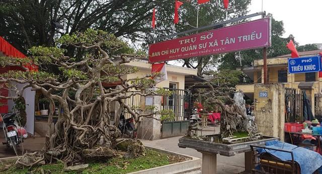 Cuộc đọ cây tiền tỷ của dân làng Triều Khúc - ảnh 9