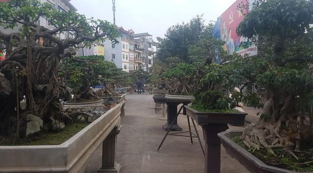 Cuộc đọ cây tiền tỷ của dân làng Triều Khúc - ảnh 11