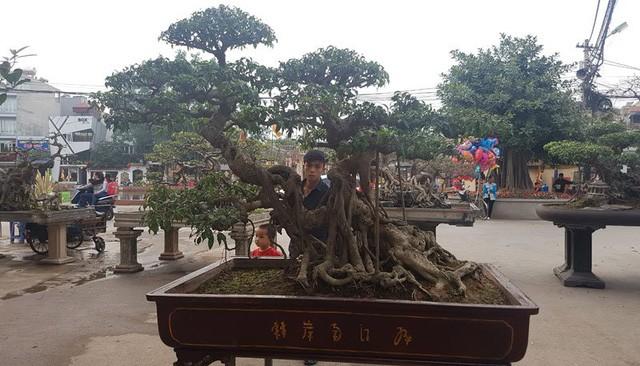 Cuộc đọ cây tiền tỷ của dân làng Triều Khúc - ảnh 1