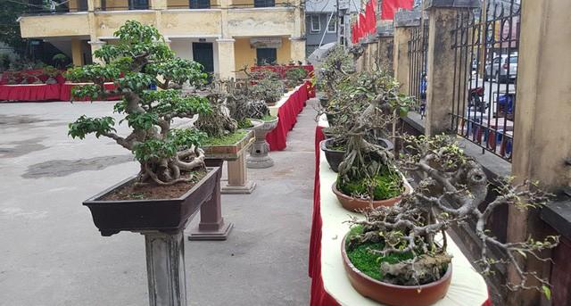 Cuộc đọ cây tiền tỷ của dân làng Triều Khúc - ảnh 6