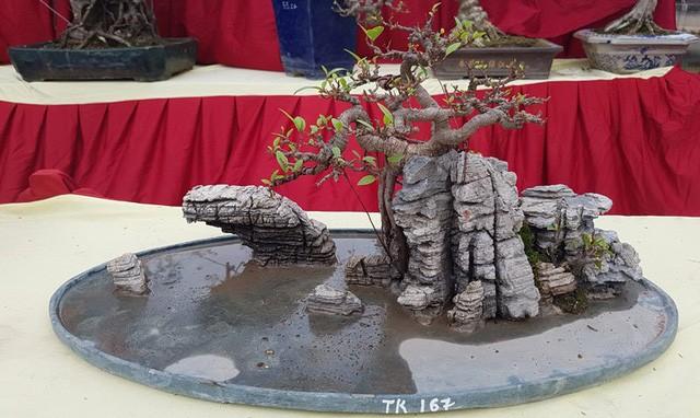 Cuộc đọ cây tiền tỷ của dân làng Triều Khúc - ảnh 7