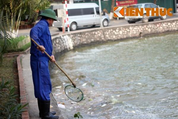 Cá chết hàng loạt, chất đống ở hồ Tây - ảnh 3