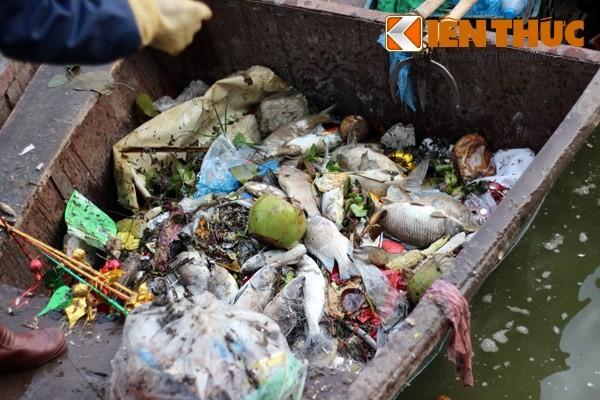 Cá chết hàng loạt, chất đống ở hồ Tây - ảnh 5