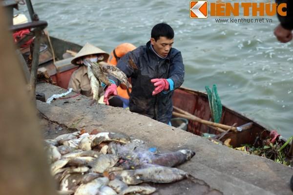 Cá chết hàng loạt, chất đống ở hồ Tây - ảnh 6