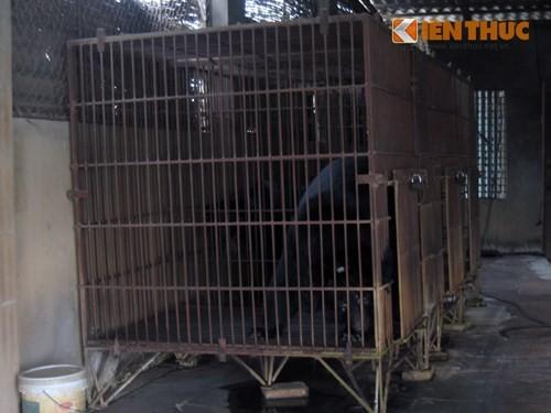 Xâm nhập lãnh địa nuôi gấu lấy mật giữa Hà Nội - ảnh 3