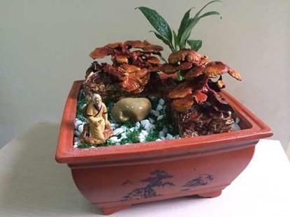 Nấm linh chi bonsai, thú chơi bạc triệu dịp tết - ảnh 2
