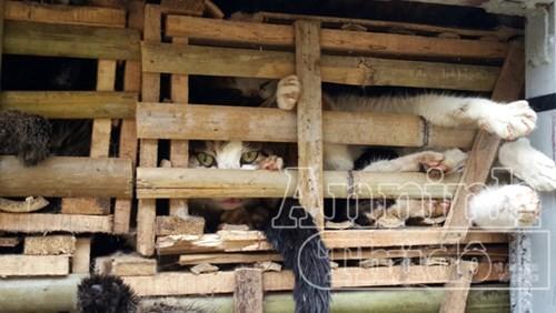 Phát hiện xe tải chở 3 tấn mèo nhập lậu từ Trung Quốc về Hà Nội - ảnh 2