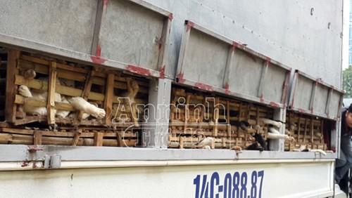 Phát hiện xe tải chở 3 tấn mèo nhập lậu từ Trung Quốc về Hà Nội - ảnh 3