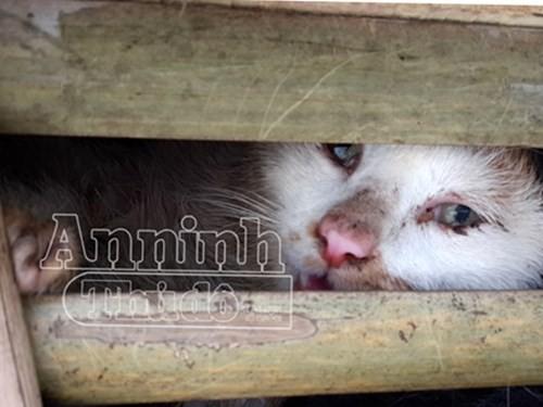 Phát hiện xe tải chở 3 tấn mèo nhập lậu từ Trung Quốc về Hà Nội - ảnh 4