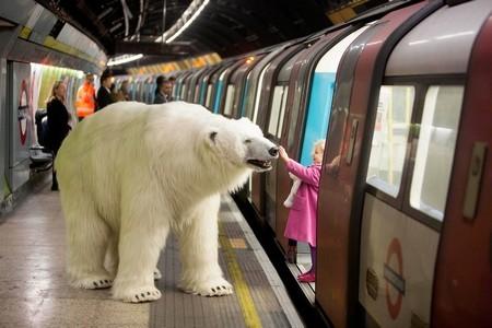 Gấu bắc cực khổng lồ lang thang trên đường phố London - ảnh 6