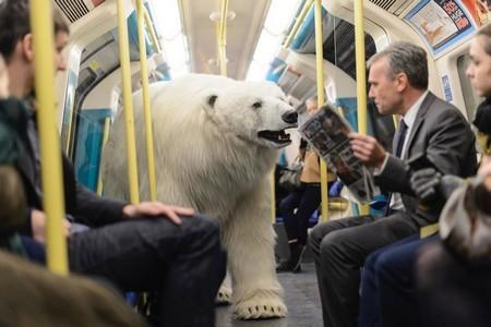 Gấu bắc cực khổng lồ lang thang trên đường phố London - ảnh 7