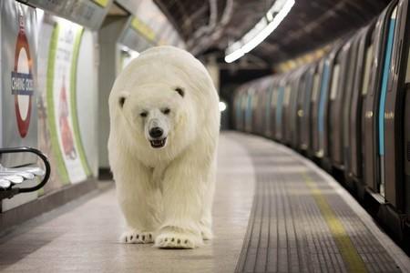 Gấu bắc cực khổng lồ lang thang trên đường phố London - ảnh 8