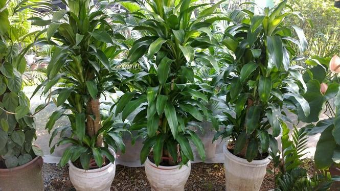 Những cây khiến trẻ ngộ độc tuyệt đối không trồng trong nhà - ảnh 1