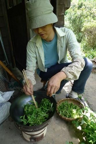 Say trà ở thiên đường trà sencha Nhật Bản - ảnh 11