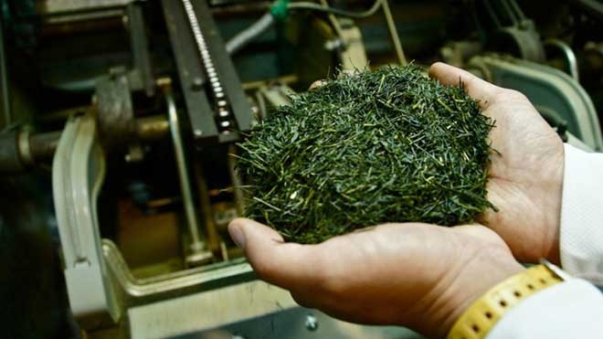 Say trà ở thiên đường trà sencha Nhật Bản - ảnh 1