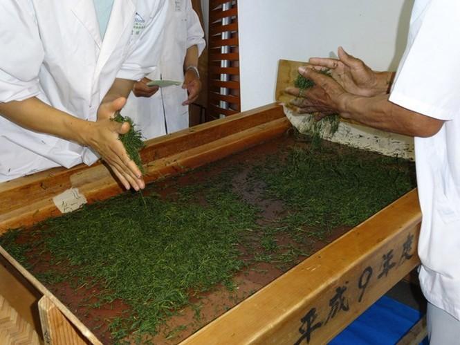 Say trà ở thiên đường trà sencha Nhật Bản - ảnh 6