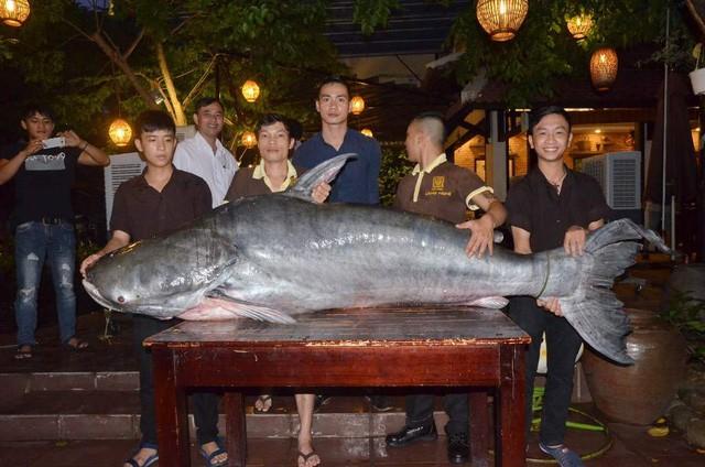 Cá tra 'khủng', nặng hơn 200 kg sa lưới ngư dân Hậu Giang - ảnh 1