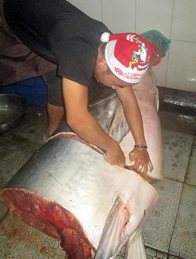 Cá tra dầu 230 kg mắc lưới ngư dân trên sông Mekong - ảnh 1