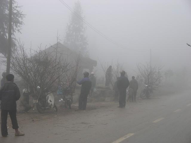 Chợ hoa đào Sa Pa trong giá lạnh 10 độ C - ảnh 4