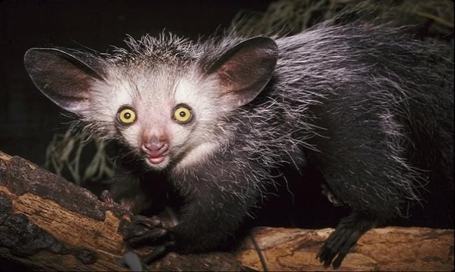 10 quái vật có vẻ ngoài đáng sợ trong tự nhiên - ảnh 4