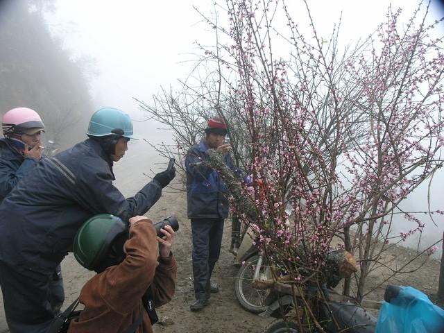 Chợ hoa đào Sa Pa trong giá lạnh 10 độ C - ảnh 8