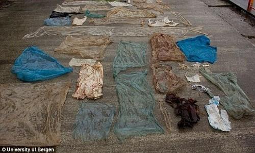 Túi nylon đầy ắp trong bụng cá voi dạt vào bờ biển Na Uy - ảnh 1