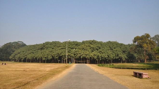 cây lớn nhất thế giới - ảnh 1