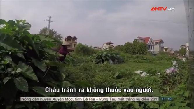 Sợ hãi không dám ăn rau muống sau khi xem phóng sự này - ảnh 5