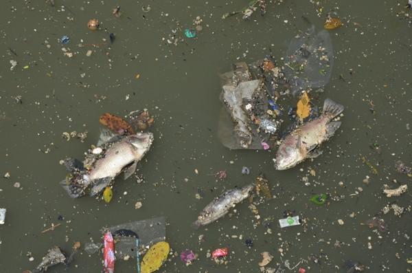 Mưa trái mùa, cá chết nhiều trên kênh Nhiêu Lộc - ảnh 1
