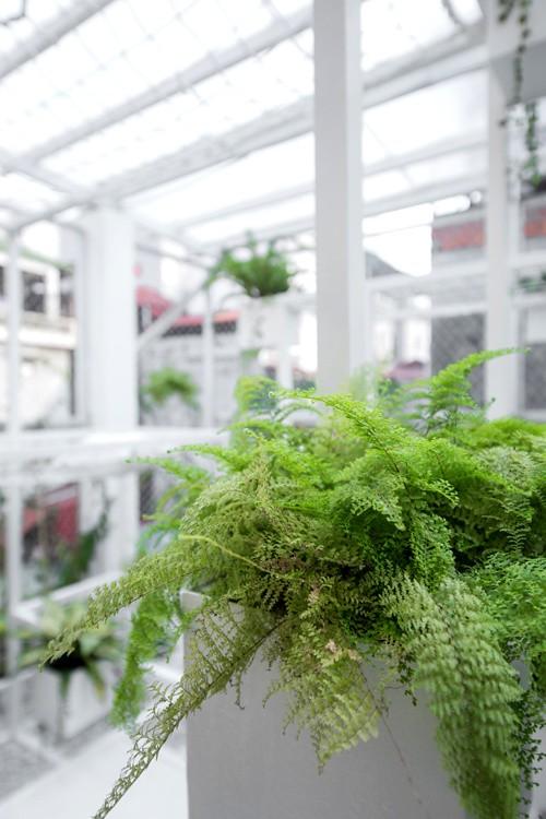 Khu 'vườn sinh thái' đặc biệt trên nóc nhà giàu Hà Nội - ảnh 6