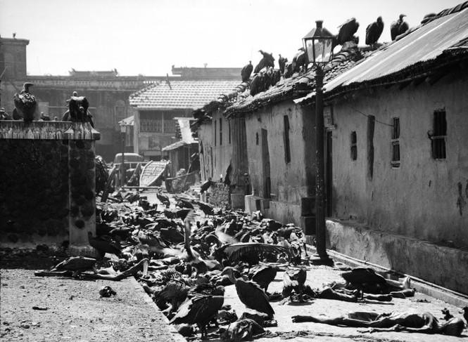 Chia cắt Ấn Độ, Pakistan: Những tháng ngày kinh hoàng - ảnh 2
