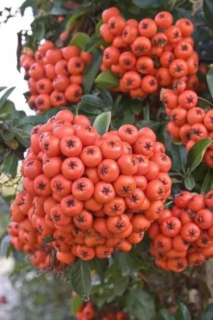 20 loài trái cây hiếm thấy trên Trái Đất, 99% người không biết hết tên - ảnh 10