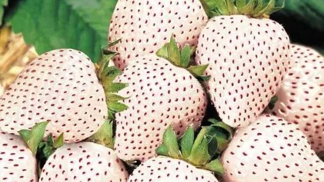 20 loài trái cây hiếm thấy trên Trái Đất, 99% người không biết hết tên - ảnh 12