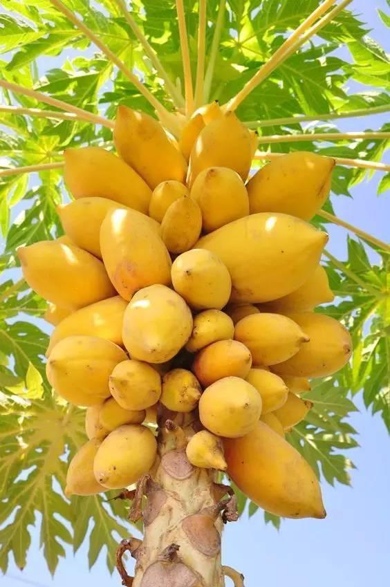 20 loài trái cây hiếm thấy trên Trái Đất, 99% người không biết hết tên - ảnh 14