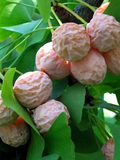 20 loài trái cây hiếm thấy trên Trái Đất, 99% người không biết hết tên - ảnh 15