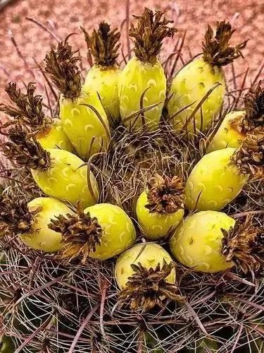 20 loài trái cây hiếm thấy trên Trái Đất, 99% người không biết hết tên - ảnh 19