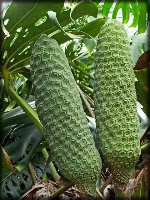 20 loài trái cây hiếm thấy trên Trái Đất, 99% người không biết hết tên - ảnh 2