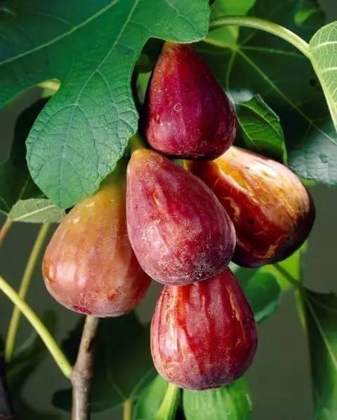 20 loài trái cây hiếm thấy trên Trái Đất, 99% người không biết hết tên - ảnh 3