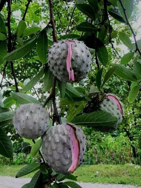 20 loài trái cây hiếm thấy trên Trái Đất, 99% người không biết hết tên - ảnh 4