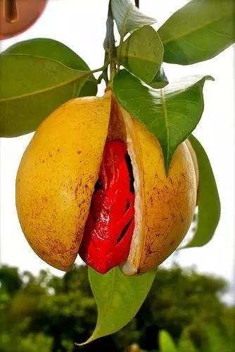 20 loài trái cây hiếm thấy trên Trái Đất, 99% người không biết hết tên - ảnh 8