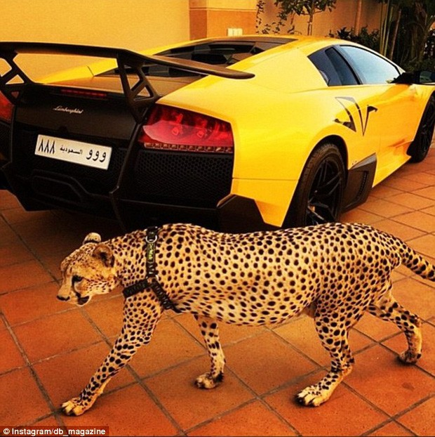 Quên siêu xe đi, đây mới là thứ để con nhà giàu khẳng định đẳng cấp - ảnh 4