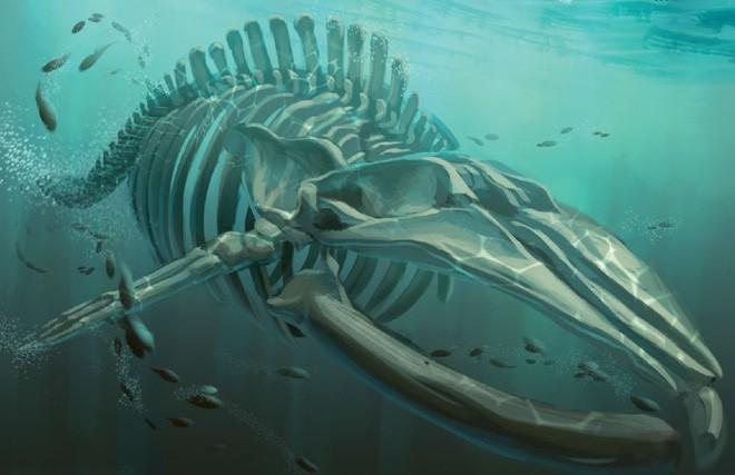 """Bí ẩn lời nguyền đáng sợ của """"quái vật biển"""" Bakekujira - ảnh 2"""