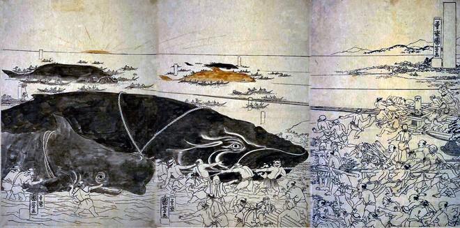 """Bí ẩn lời nguyền đáng sợ của """"quái vật biển"""" Bakekujira - ảnh 3"""